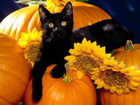 Pumpkins and blackcat