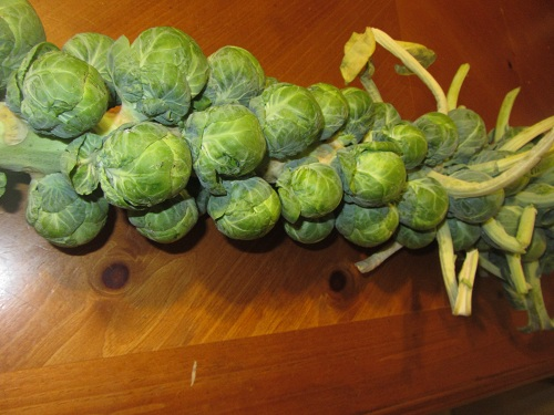 Brussels Sprout Stalk