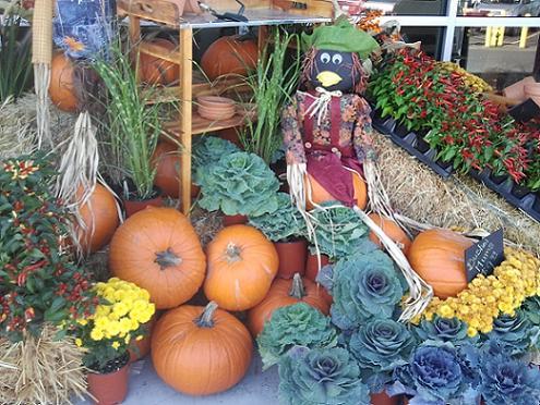 Pumpkin Tips from Healthy Diet Habits